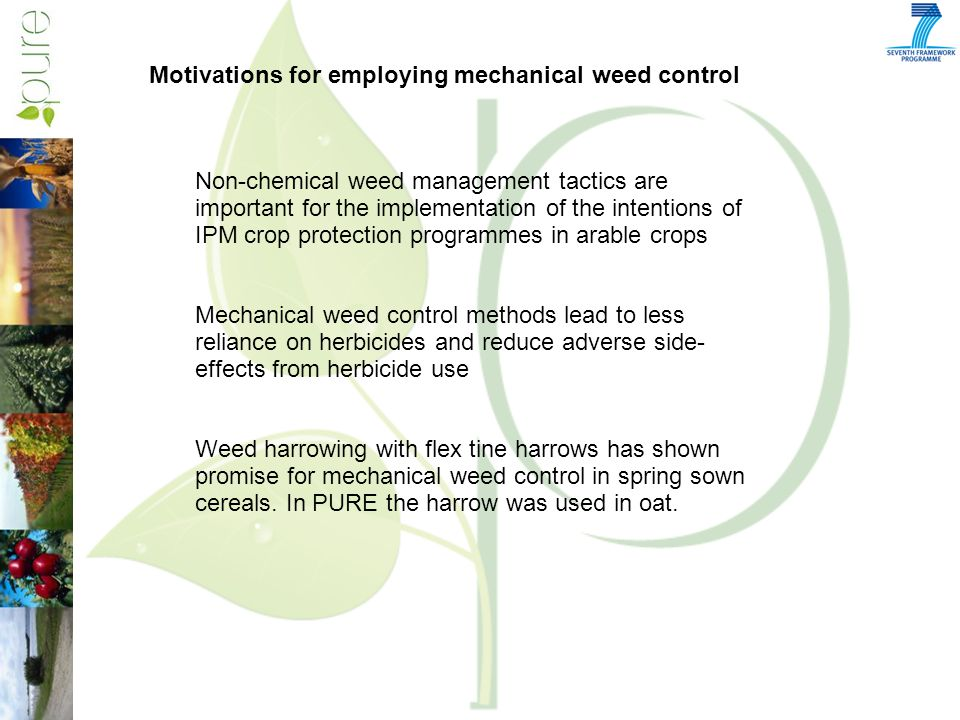 Non-chemical weed management tactics are important for the implementation of the intentions of IPM crop protection programmes in arable crops Mechanical weed control methods lead to less reliance on herbicides and reduce adverse side- effects from herbicide use Weed harrowing with flex tine harrows has shown promise for mechanical weed control in spring sown cereals.