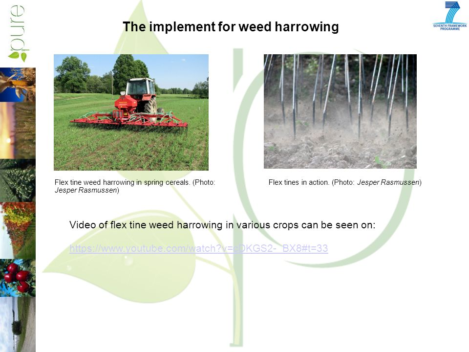 The implement for weed harrowing Flex tine weed harrowing in spring cereals.