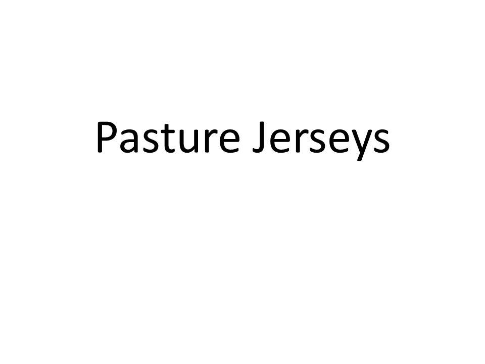 Pasture Jerseys