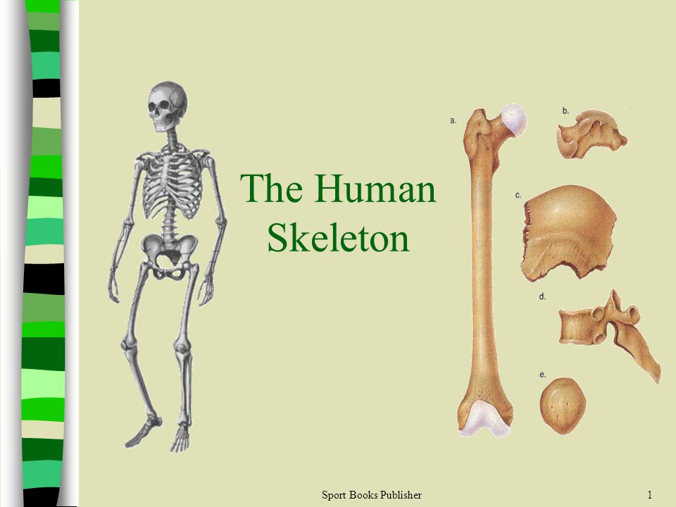 Sport Books Publisher1 The Human Skeleton