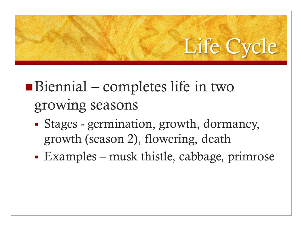 Life Cycle Biennial – completes life in two growing seasons  Stages - germination, growth, dormancy, growth (season 2), flowering, death  Examples – musk thistle, cabbage, primrose