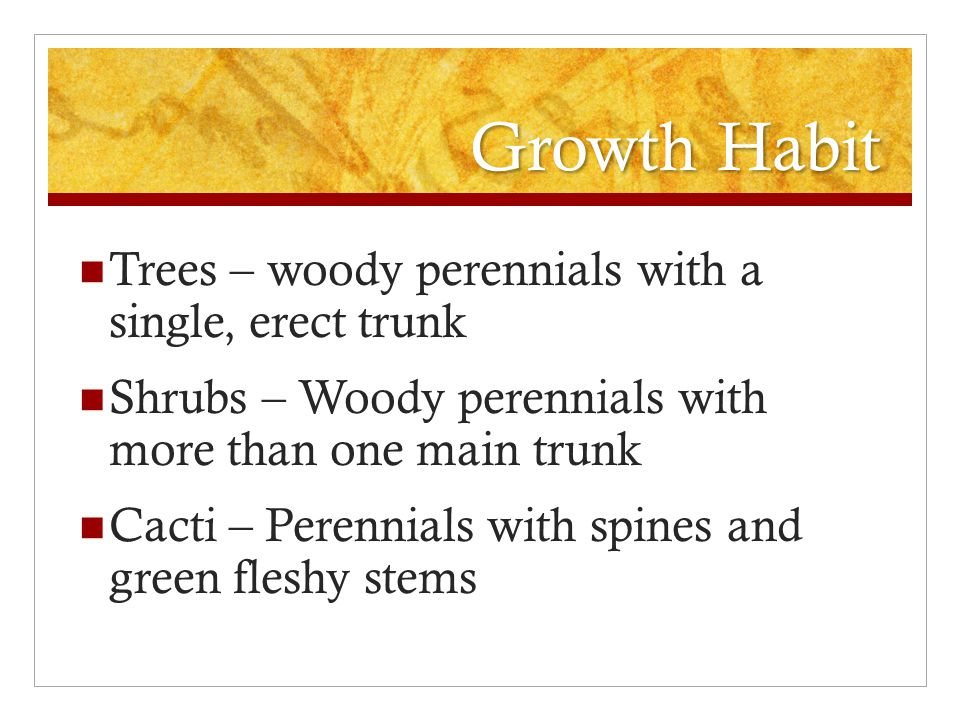 Growth Habit Trees – woody perennials with a single, erect trunk Shrubs – Woody perennials with more than one main trunk Cacti – Perennials with spines and green fleshy stems