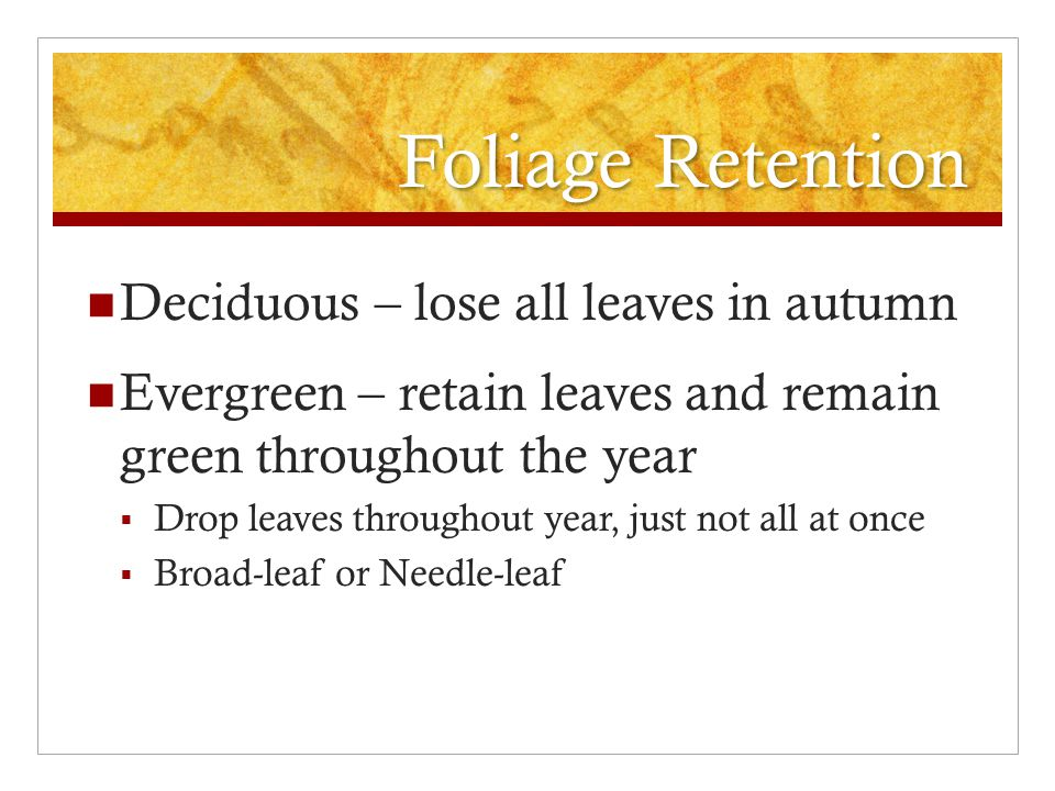 Foliage Retention Deciduous – lose all leaves in autumn Evergreen – retain leaves and remain green throughout the year  Drop leaves throughout year, just not all at once  Broad-leaf or Needle-leaf