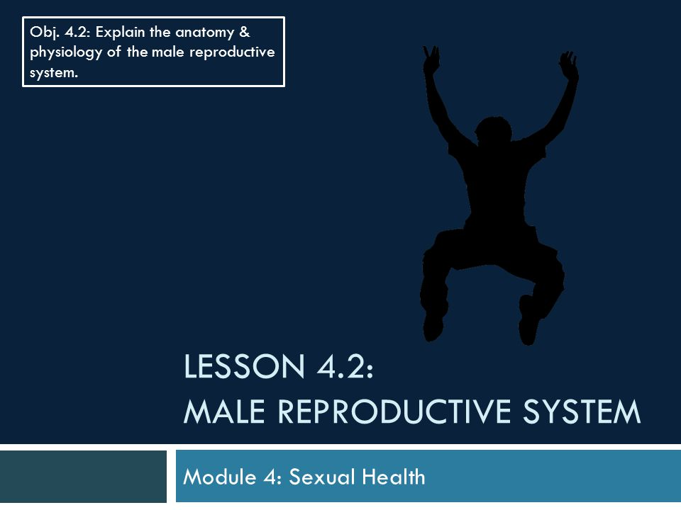 LESSON 4.2: MALE REPRODUCTIVE SYSTEM Module 4: Sexual Health Obj.