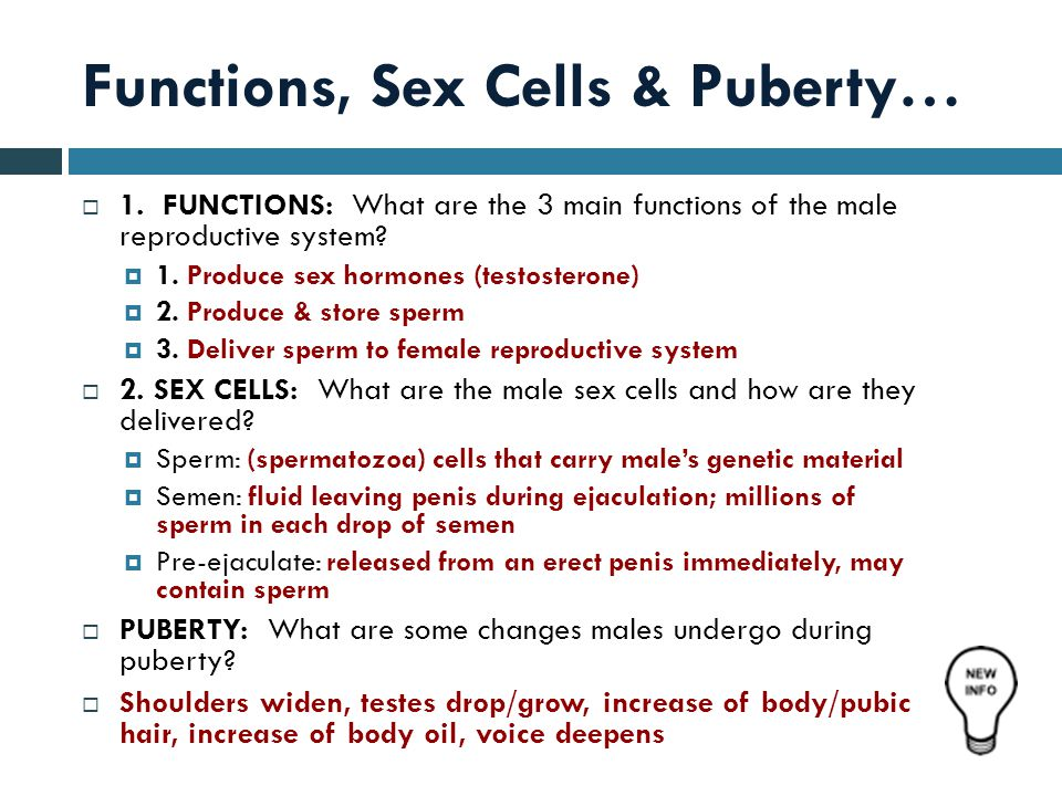 Functions, Sex Cells & Puberty…  1.