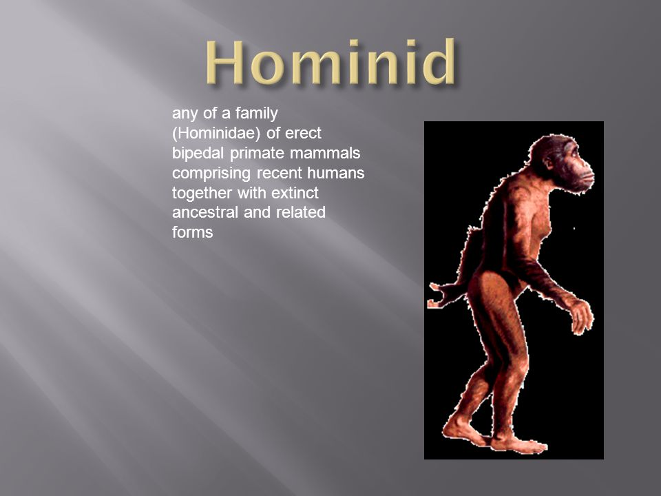 any of a family (Hominidae) of erect bipedal primate mammals comprising recent humans together with extinct ancestral and related forms