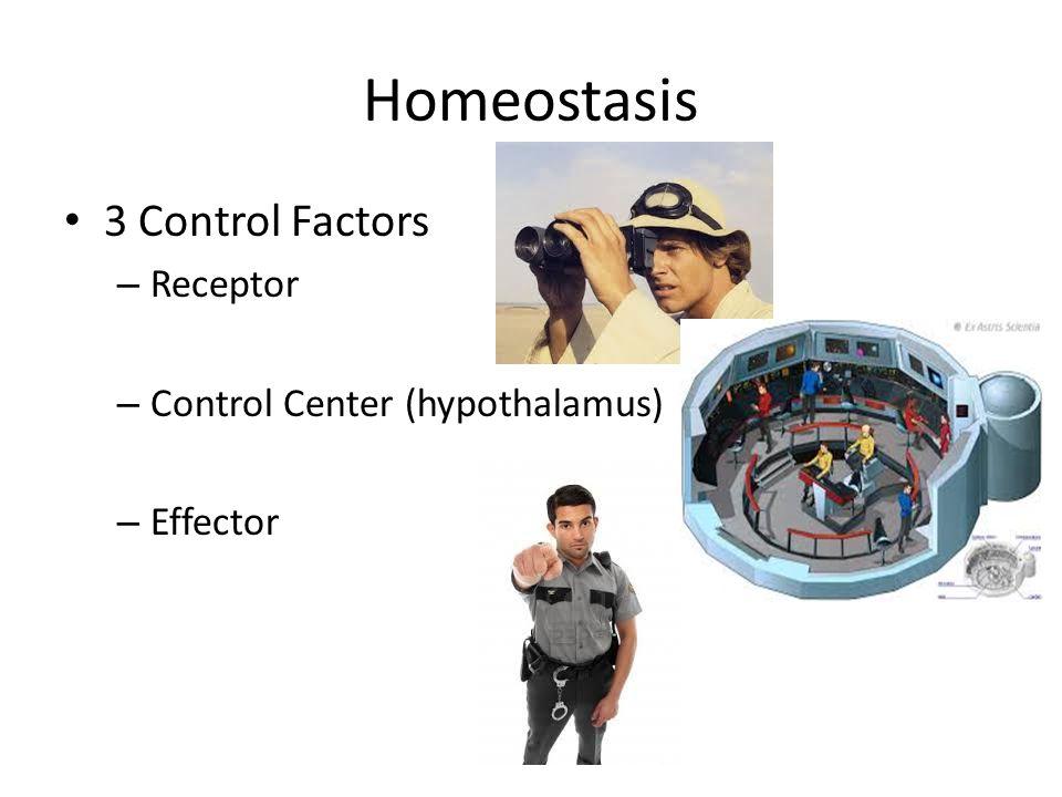 Homeostasis 3 Control Factors – Receptor – Control Center (hypothalamus) – Effector