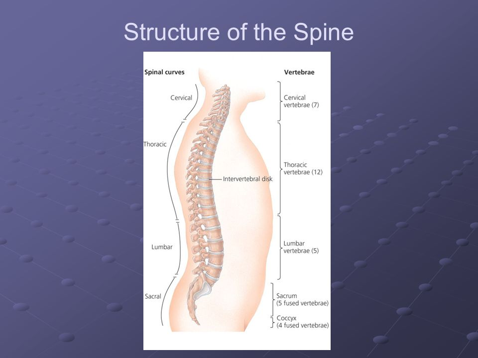 Structure of the Spine