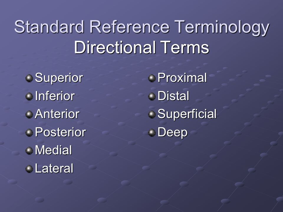Standard Reference Terminology Directional Terms SuperiorInferiorAnteriorPosteriorMedialLateralProximalDistalSuperficialDeep