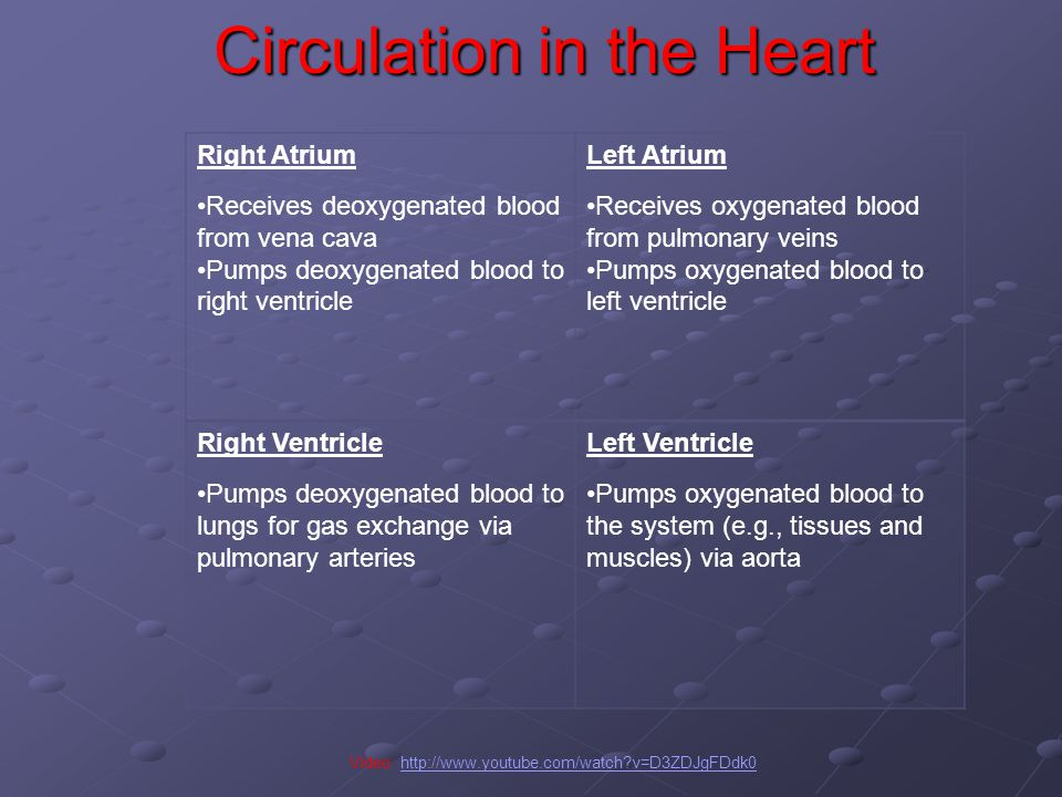 Circulation in the Heart Video: http://www.youtube.com/watch v=D3ZDJgFDdk0http://www.youtube.com/watch v=D3ZDJgFDdk0 Right Atrium Receives deoxygenated blood from vena cava Pumps deoxygenated blood to right ventricle Left Atrium Receives oxygenated blood from pulmonary veins Pumps oxygenated blood to left ventricle Right Ventricle Pumps deoxygenated blood to lungs for gas exchange via pulmonary arteries Left Ventricle Pumps oxygenated blood to the system (e.g., tissues and muscles) via aorta
