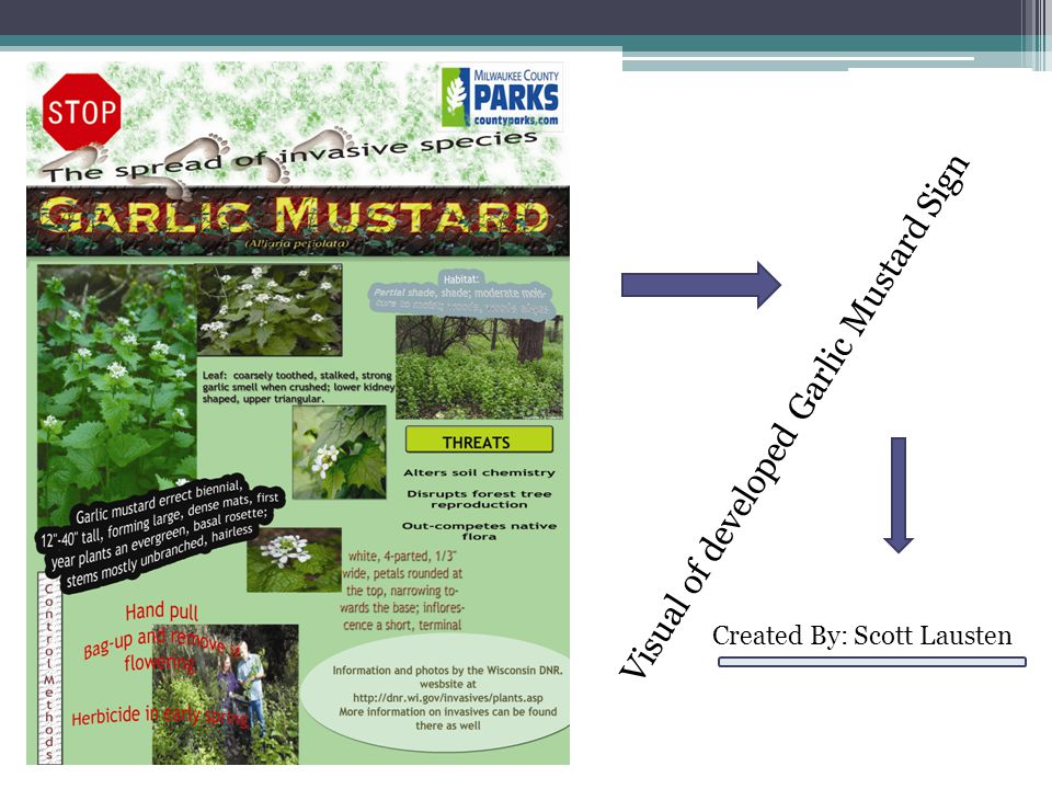 Visual of developed Garlic Mustard Sign Created By: Scott Lausten