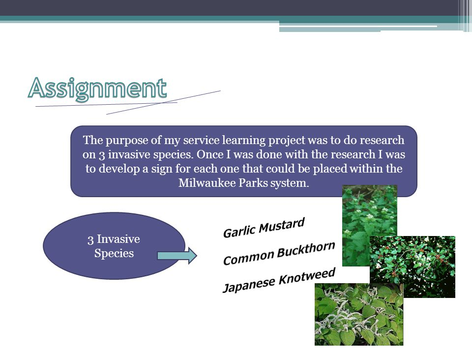 The purpose of my service learning project was to do research on 3 invasive species.