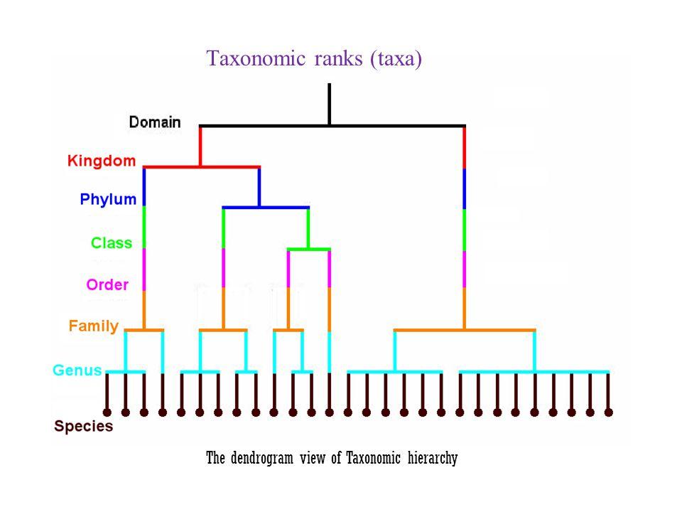 The dendrogram view of Taxonomic hierarchy Taxonomic ranks (taxa)