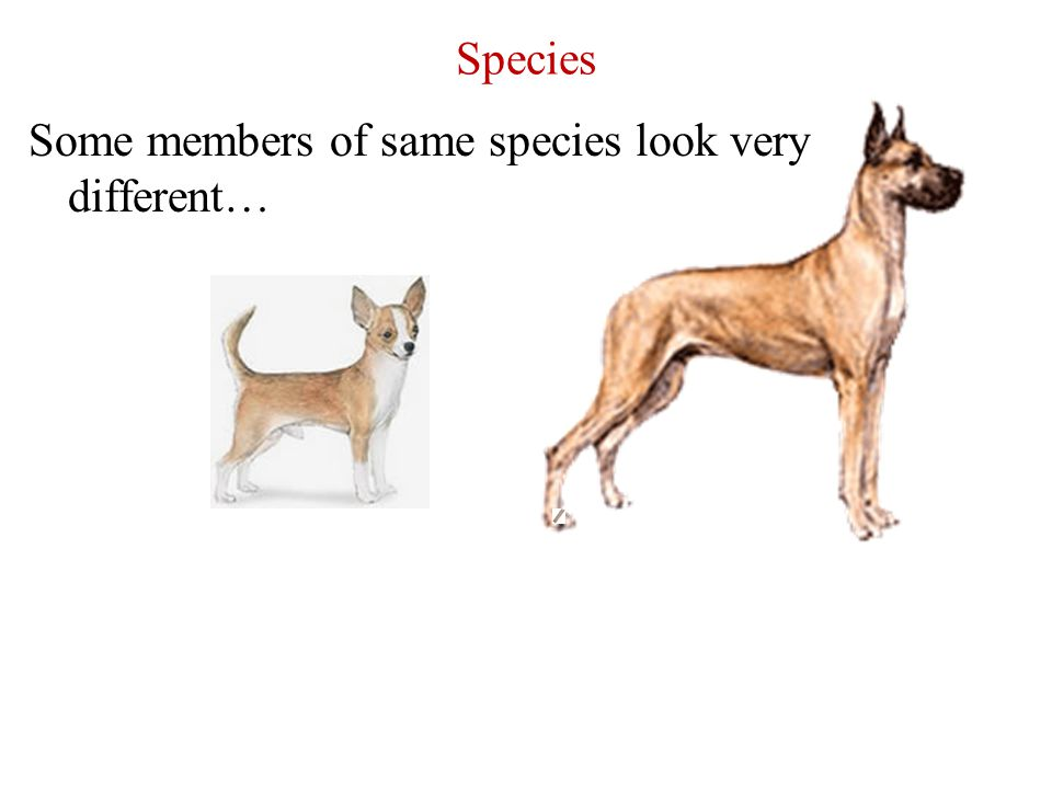 Species Some members of same species look very different…