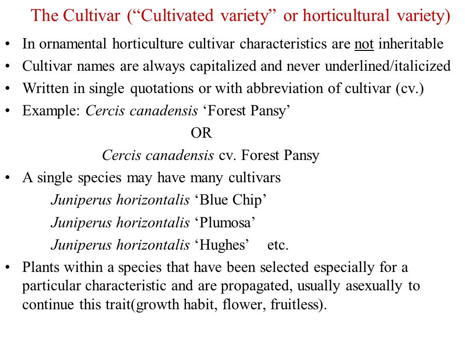 """The Cultivar (""""Cultivated variety"""" or horticultural variety) In ornamental horticulture cultivar characteristics are not inheritable Cultivar names ar"""