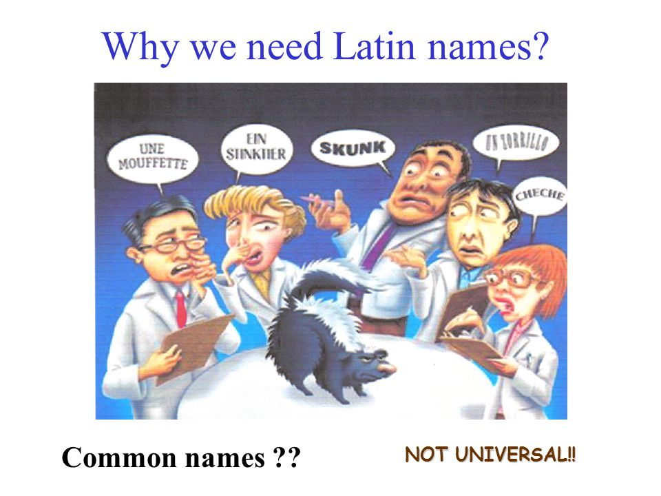 NOT UNIVERSAL!! Why we need Latin names? Common names ??
