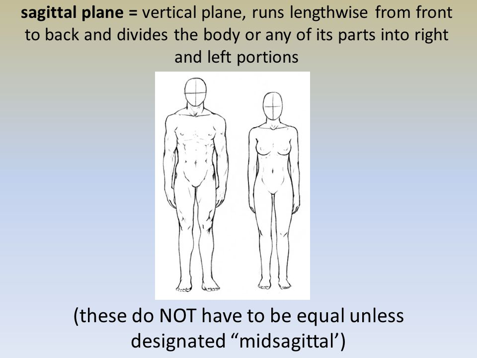 sagittal plane = vertical plane, runs lengthwise from front to back and divides the body or any of its parts into right and left portions (these do NOT have to be equal unless designated midsagittal')
