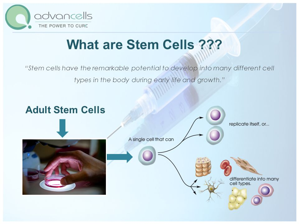 What are Stem Cells .
