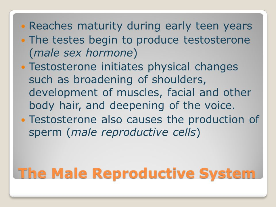 Testes: also known as testicles ◦Two small glands that produce sperm ◦100 million a day ◦Hang outside of the body in a sac called the scrotum ◦The scrotum protects sperm by keeping the testes at a temp below normal body temp.