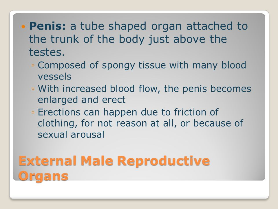 Menstruation If the ovum does not become fertilized then the lining of the uterus breaks down into blood, tissue, and fluids which pass through the cervix- neck of the uterus Menstrual flow happens once a month and lasts 3-5 days After the menstrual cycle ends, the process begins again.
