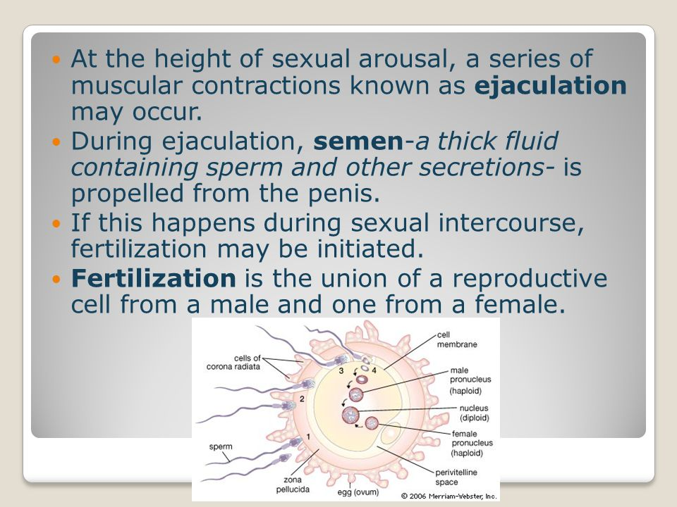 Circumcision – surgical removal of the foreskin covering the tip of the penis This is usually a parental decision that happens at the birth.