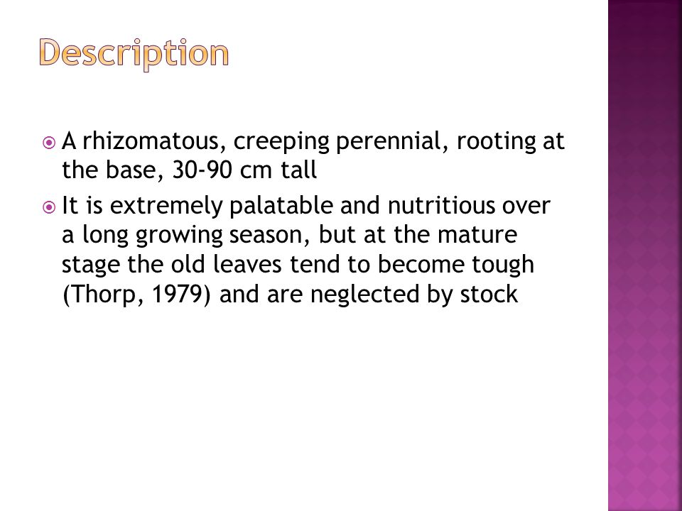  A rhizomatous, creeping perennial, rooting at the base, 30-90 cm tall  It is extremely palatable and nutritious over a long growing season, but at the mature stage the old leaves tend to become tough (Thorp, 1979) and are neglected by stock