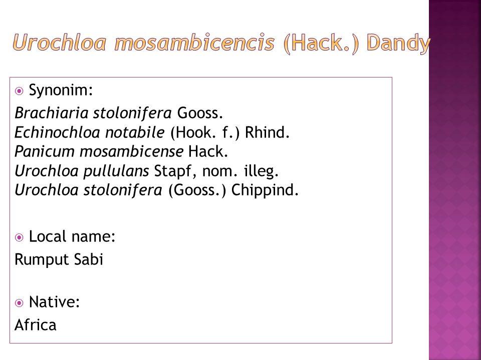  Synonim: Brachiaria stolonifera Gooss. Echinochloa notabile (Hook.