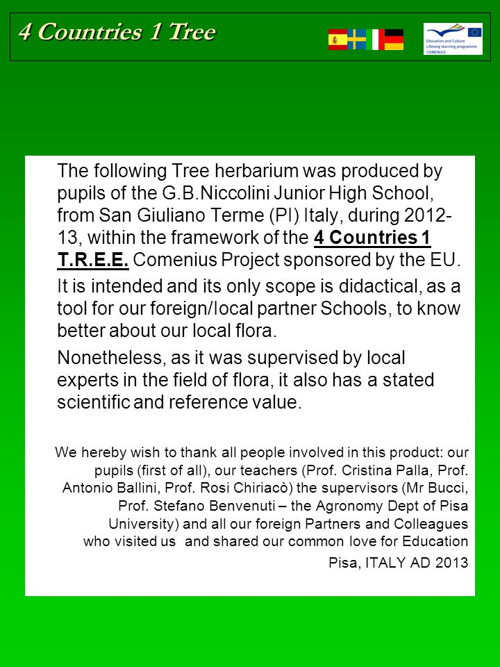 4 Countries 1 Tree The following Tree herbarium was produced by pupils of the G.B.Niccolini Junior High School, from San Giuliano Terme (PI) Italy, during 2012- 13, within the framework of the 4 Countries 1 T.R.E.E.