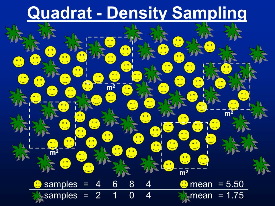 Quadrat - Density Sampling m 2 samples = 4242 6161 8080 m 2 4444 mean = 5.50 mean = 1.75