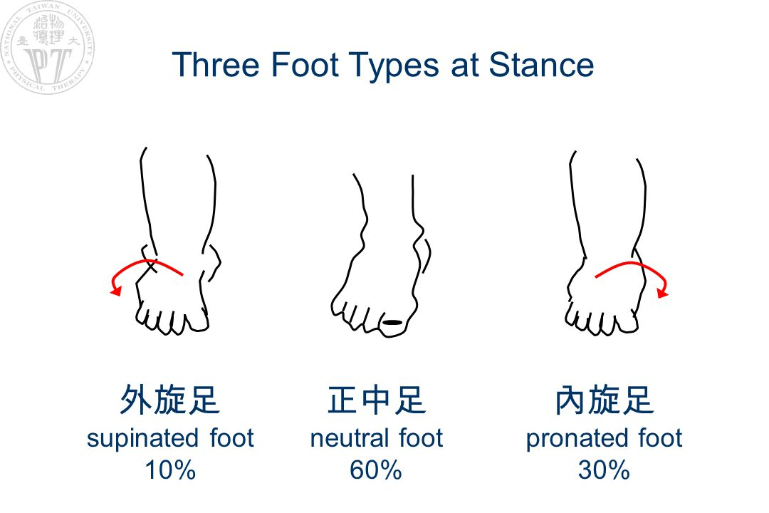 Three Foot Types at Stance 外旋足 supinated foot 10% 正中足 neutral foot 60% 內旋足 pronated foot 30%
