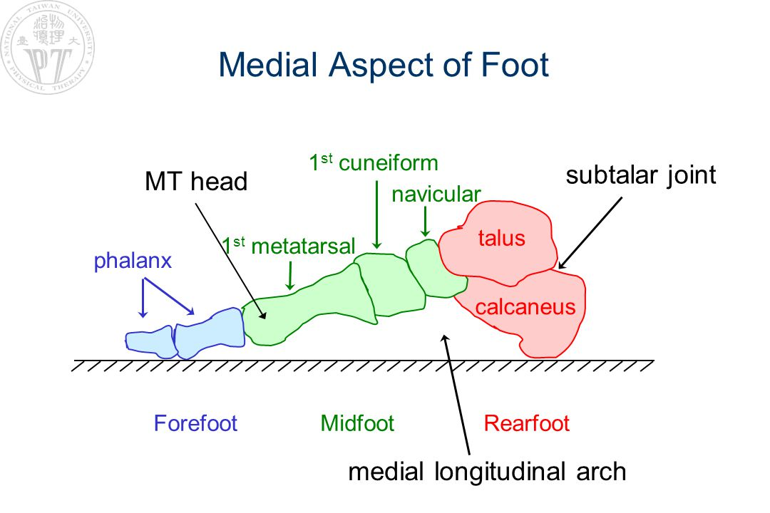 Biomechanics of Foot and Podiatry Physical Therapy Biomechanics of Foot Foot Orthotic Therapy –Concept I: plantigrade –Concept II: total contact –Concept III: neutral foot Podiatry Physical Therapy