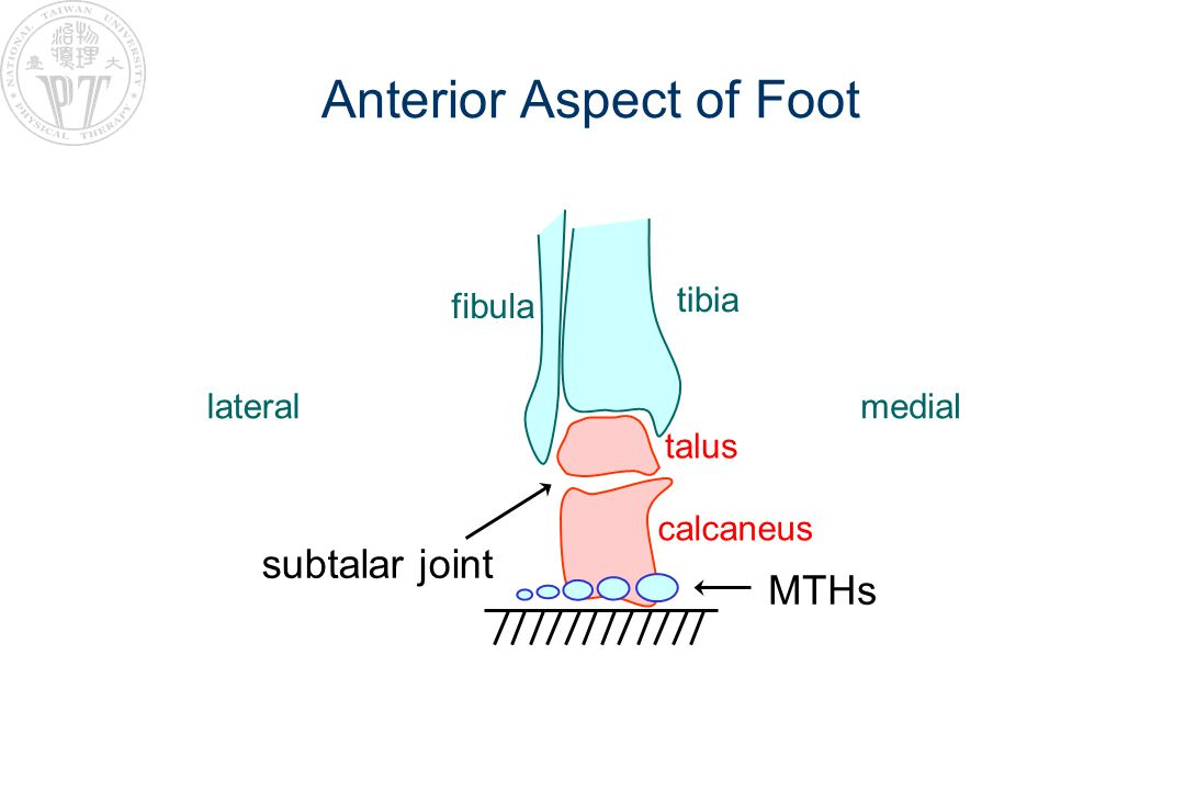 Concept II: Total Contact to provide even distribution of WB onto whole foot by total plantar surface of foot contacting ground Increase area of contact to decrease pressure since P = F /A examples: –filling stuff into shoes to support the arch –total contact orthoses transverse arch medial longitudinal arch lateral longitudinal arch