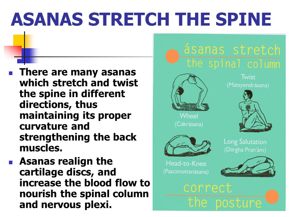 ASANAS STRETCH THE SPINE There are many asanas which stretch and twist the spine in different directions, thus maintaining its proper curvature and st
