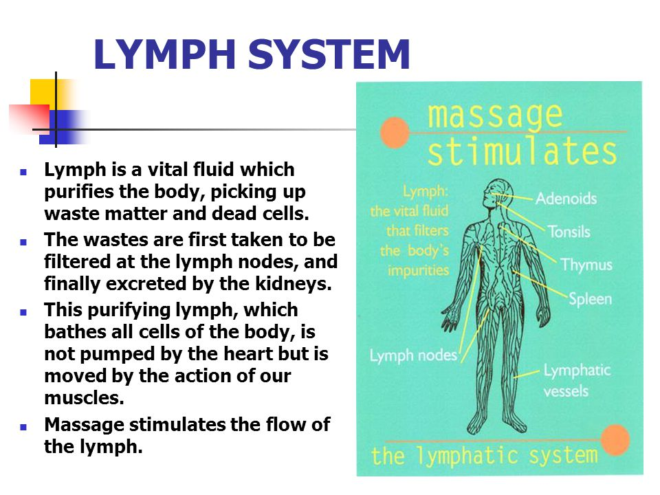 LYMPH SYSTEM Lymph is a vital fluid which purifies the body, picking up waste matter and dead cells. The wastes are first taken to be filtered at the