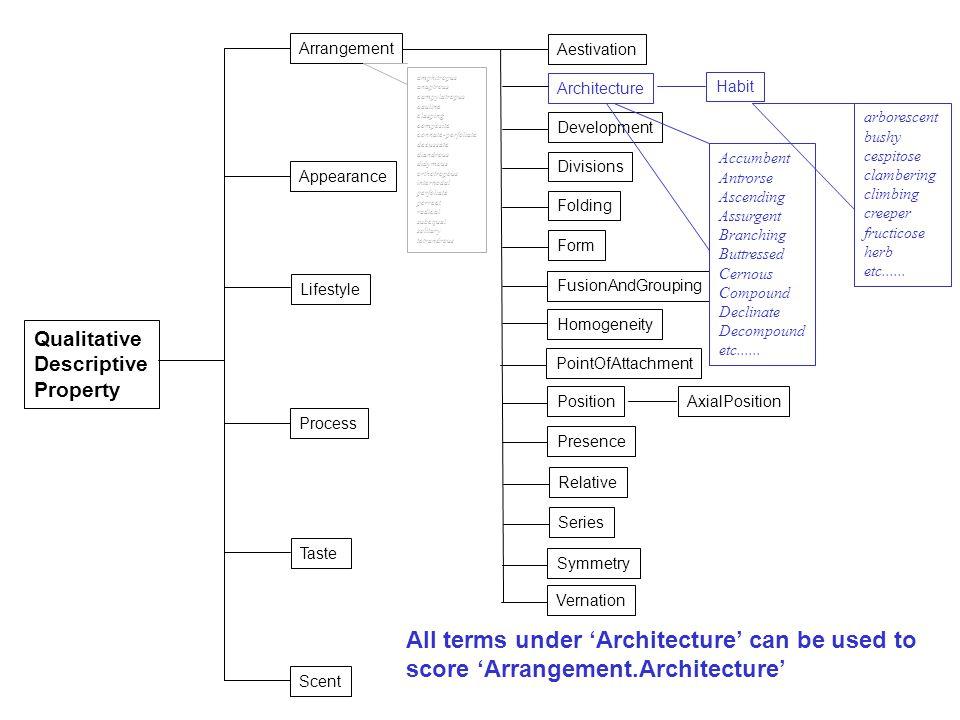 Qualitative Descriptive Property Taste Scent Appearance Process Lifestyle Arrangement Aestivation Architecture Divisions Folding Form FusionAndGroupin