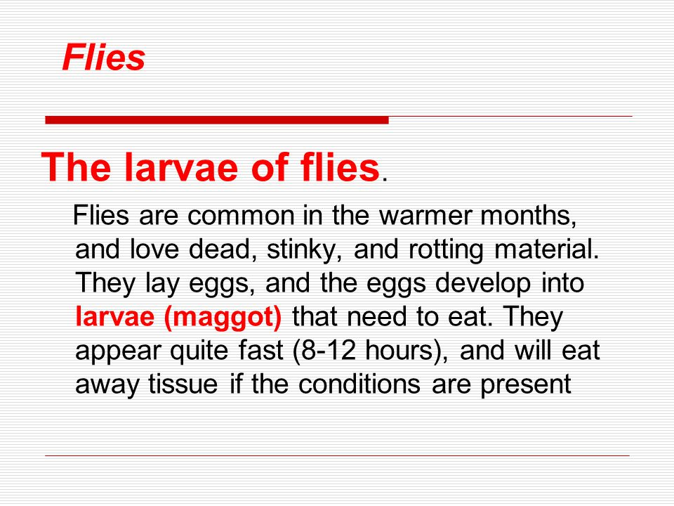 Flies The larvae of flies. Flies are common in the warmer months, and love dead, stinky, and rotting material. They lay eggs, and the eggs develop int