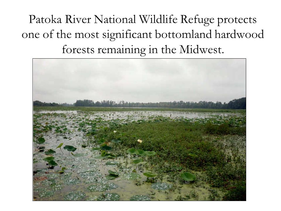 Patoka River National Wildlife Refuge protects one of the most significant bottomland hardwood forests remaining in the Midwest.