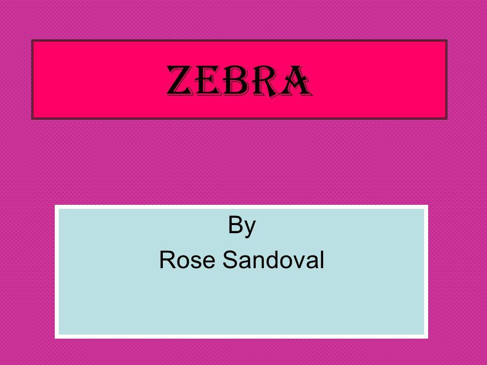 Zebra By Rose Sandoval