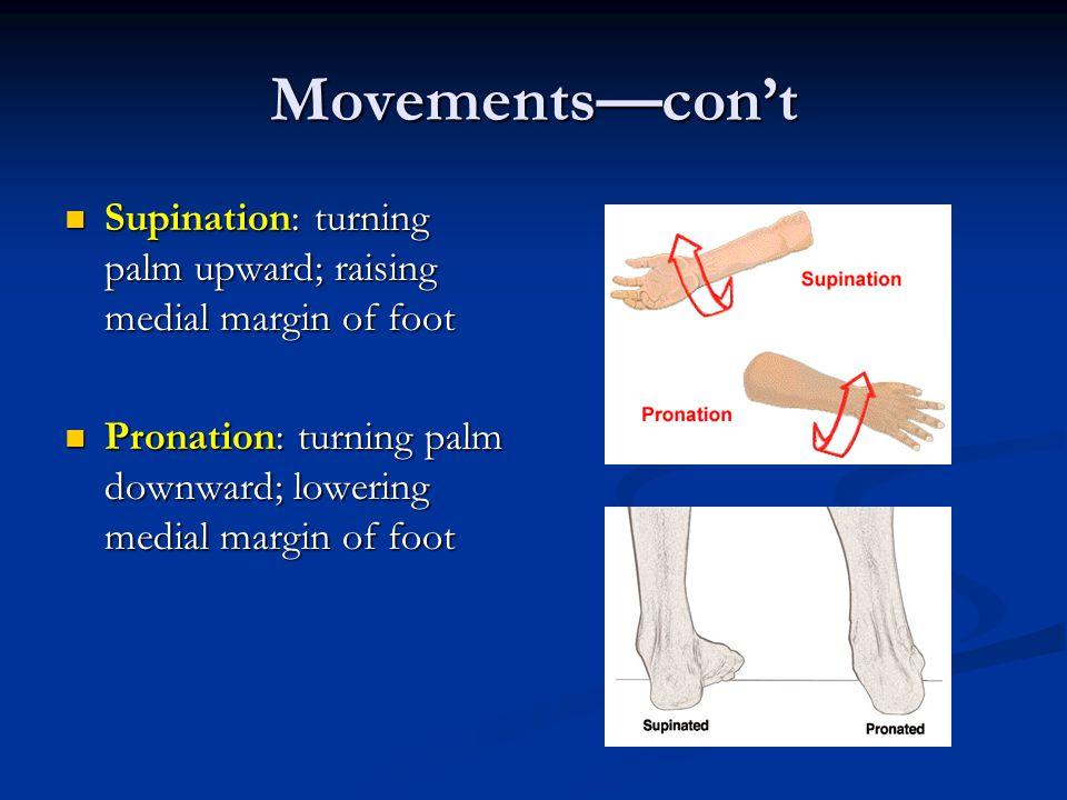 Movements—con't Supination: turning palm upward; raising medial margin of foot Supination: turning palm upward; raising medial margin of foot Pronatio