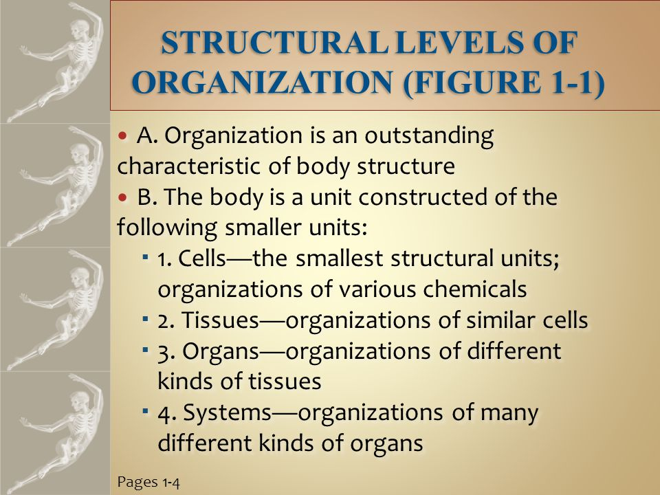 STRUCTURAL LEVELS OF ORGANIZATION (FIGURE 1-1) A.
