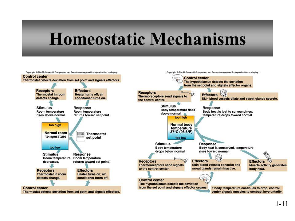 Homeostatic Mechanisms 1-11