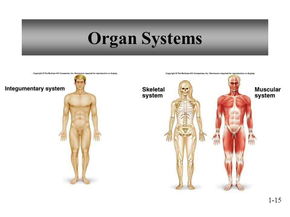 Organ Systems 1-15