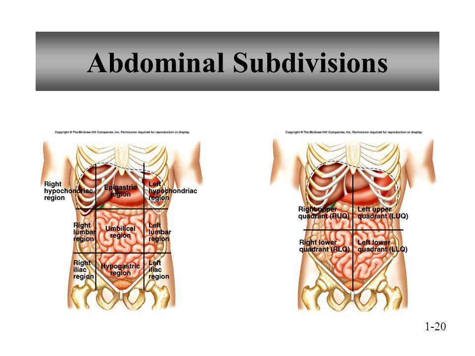 Abdominal Subdivisions 1-20