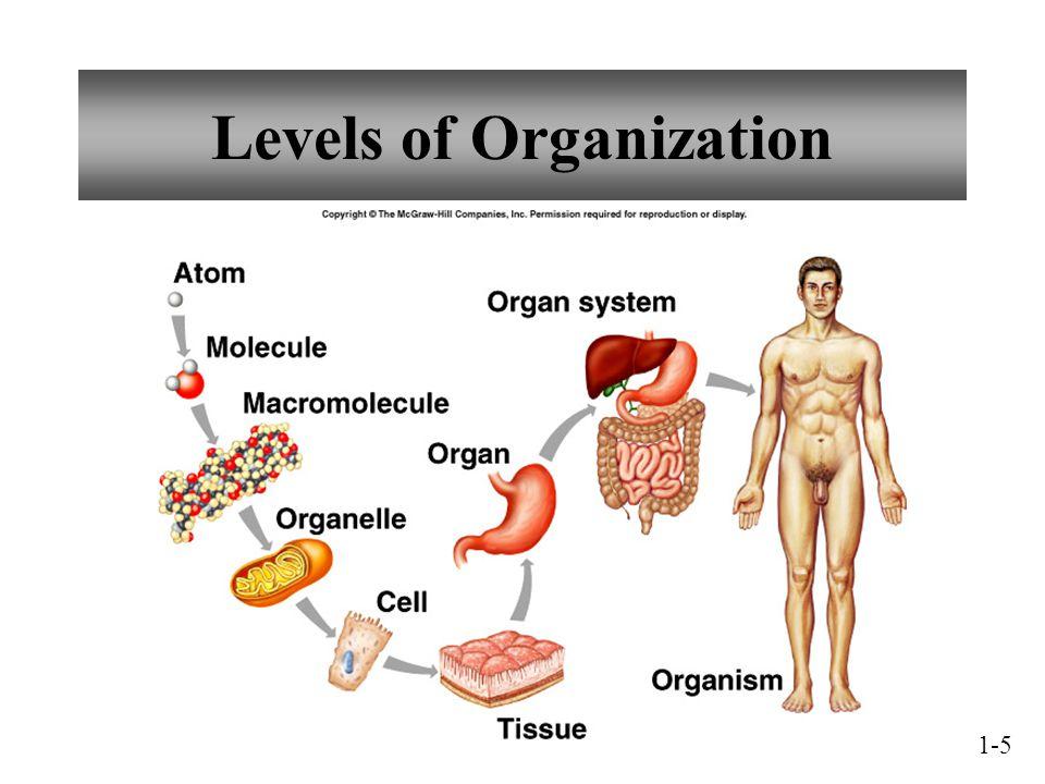 Levels of Organization 1-5