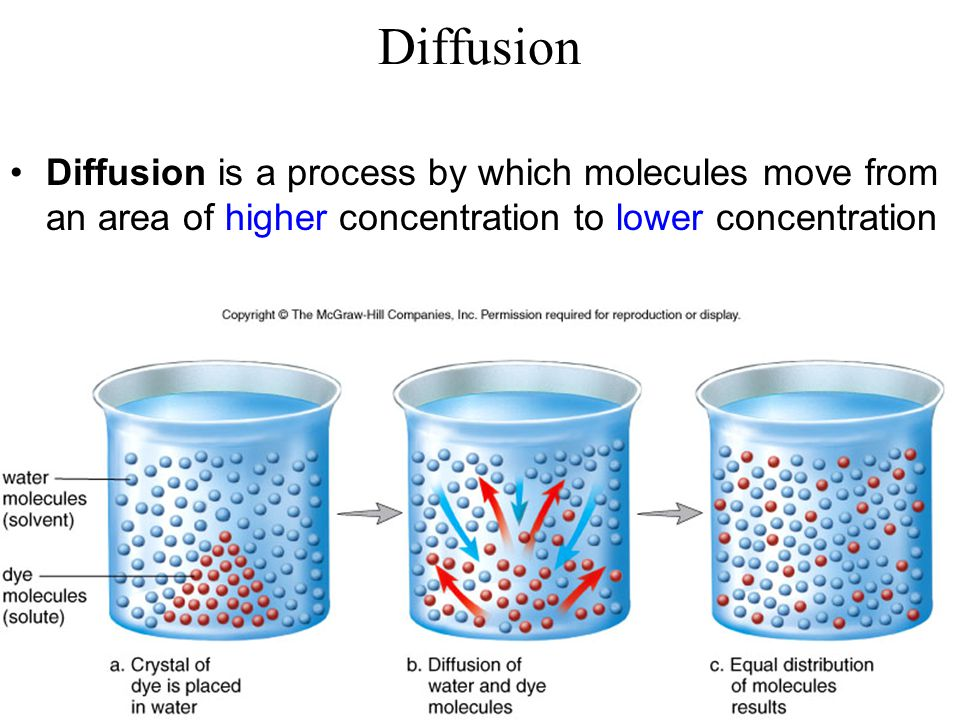 You are going to do a part of this lab relating to what you've already learned about cell size –The next 2 slides are from lecture 1.3a, which you have already studied and learned about Diffusion