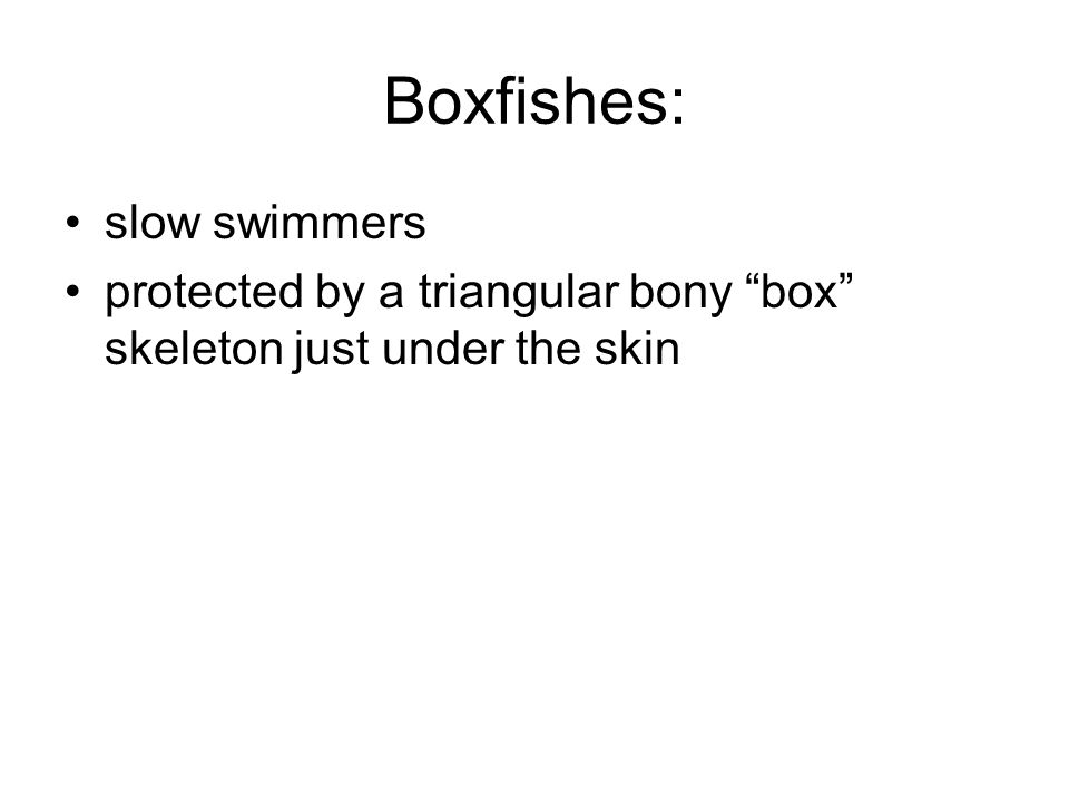"Boxfishes: slow swimmers protected by a triangular bony ""box"" skeleton just under the skin"