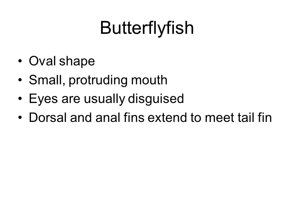 Butterflyfish Oval shape Small, protruding mouth Eyes are usually disguised Dorsal and anal fins extend to meet tail fin