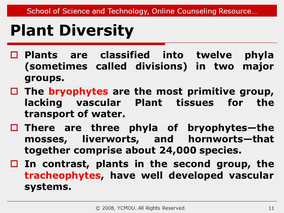 School of Science and Technology, Online Counseling Resource… Plant Diversity  Plants are classified into twelve phyla (sometimes called divisions) in two major groups.