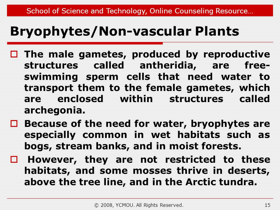 School of Science and Technology, Online Counseling Resource… Bryophytes/Non-vascular Plants  The male gametes, produced by reproductive structures called antheridia, are free- swimming sperm cells that need water to transport them to the female gametes, which are enclosed within structures called archegonia.