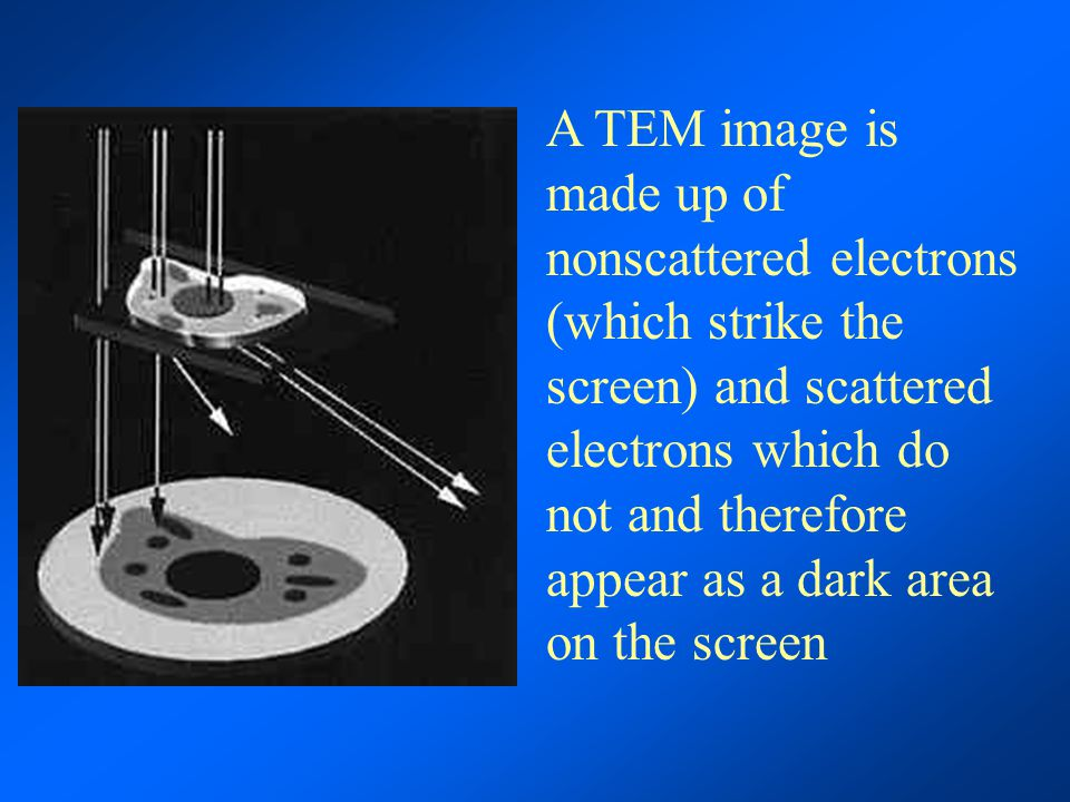 A TEM image is made up of nonscattered electrons (which strike the screen) and scattered electrons which do not and therefore appear as a dark area on